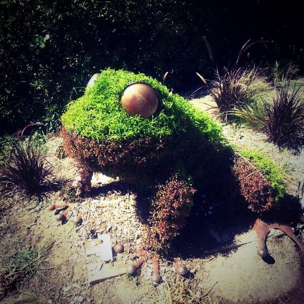 La grenouille de Borely